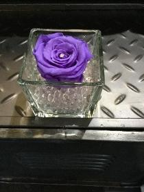 Lilac everlasting rose in clear glass tank vase