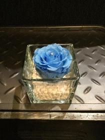 Everlasting rose baby blue in clear glass tank vase