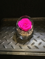 Cerise pink everlasting rose in tipped glass vase