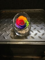 Everlasting rainbow rose in tipped glass vase