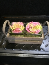 Twin Pastel everlasting roses in vintage glass crate